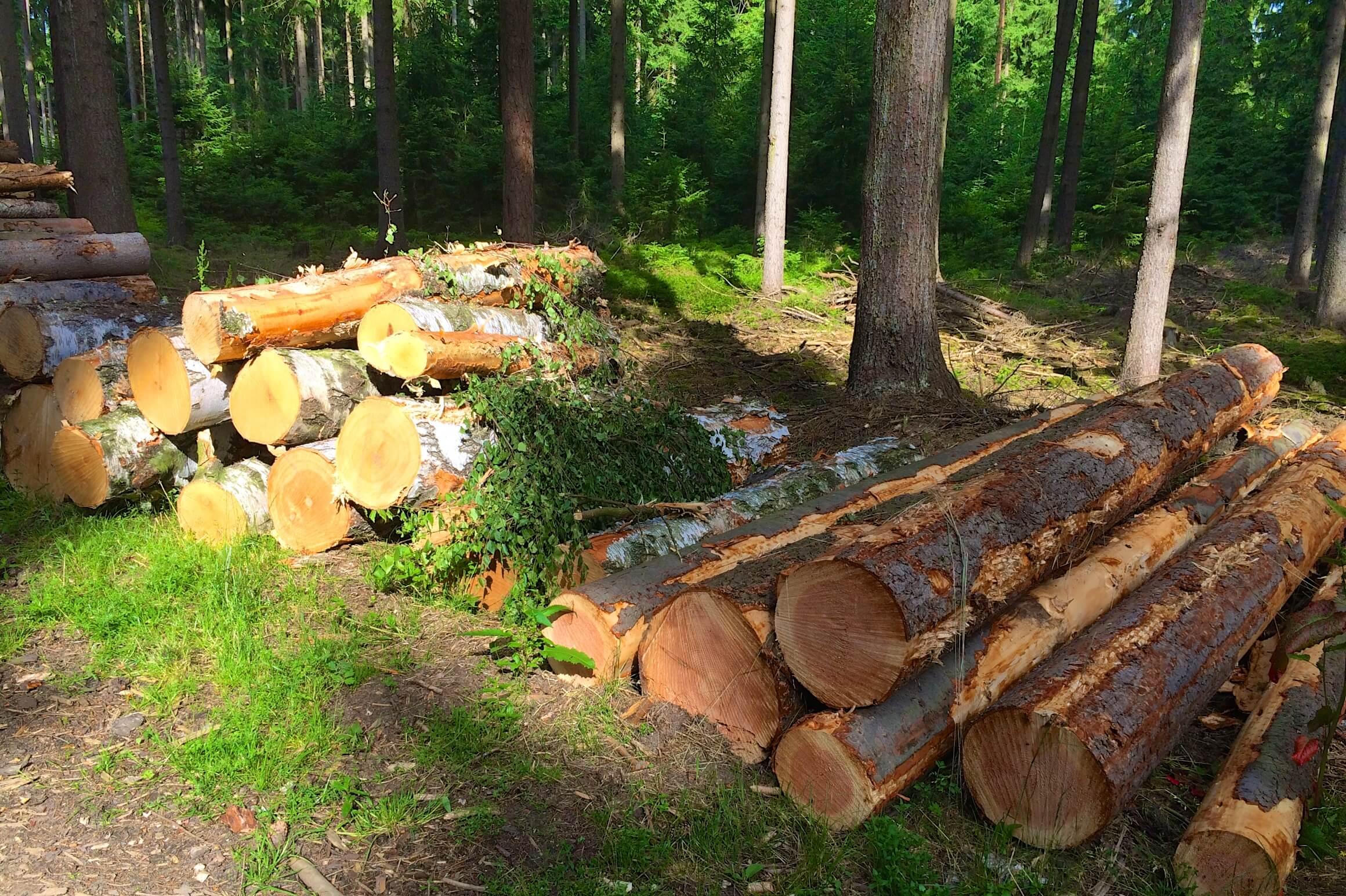 Nordic Walk: Holzgeruch im Wald