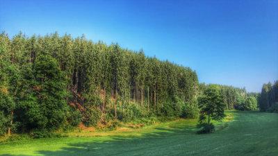 Hiking im Schneckengrüner Wald im Vogtland