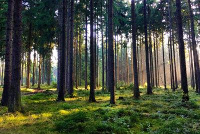 Hiking im Schneckengrüner Wald im Vogtland bei kühlen Temperaturen
