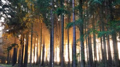 Hiking im Schneckengrüner Wald im Vogtland bei Sonnenaufgang