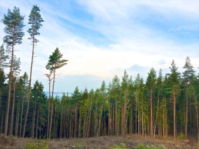 Hiking & Trekking im Schneckengrüner Wald im Vogtland