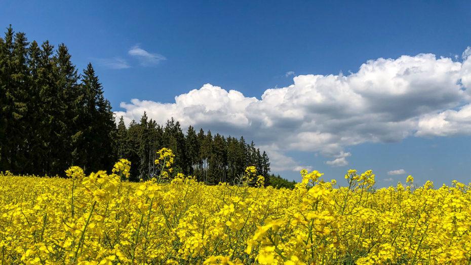 MTB-Vogtland-Tour - Wisenta-Quellgebiet