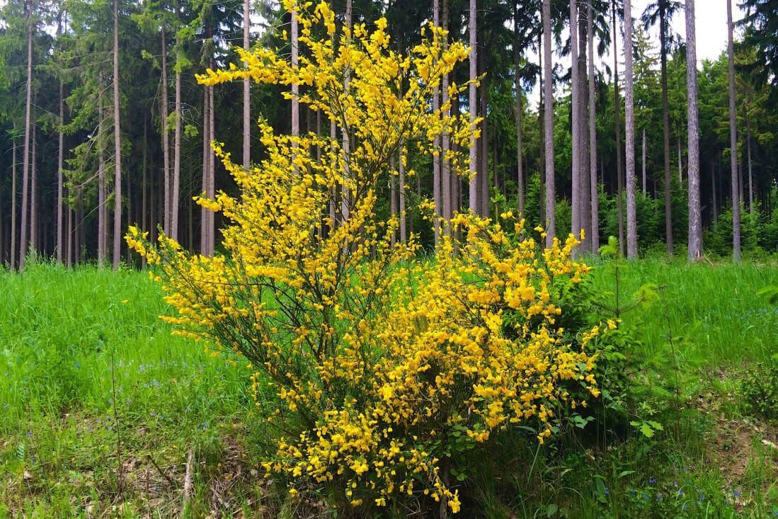 Nordic Walking Blüten