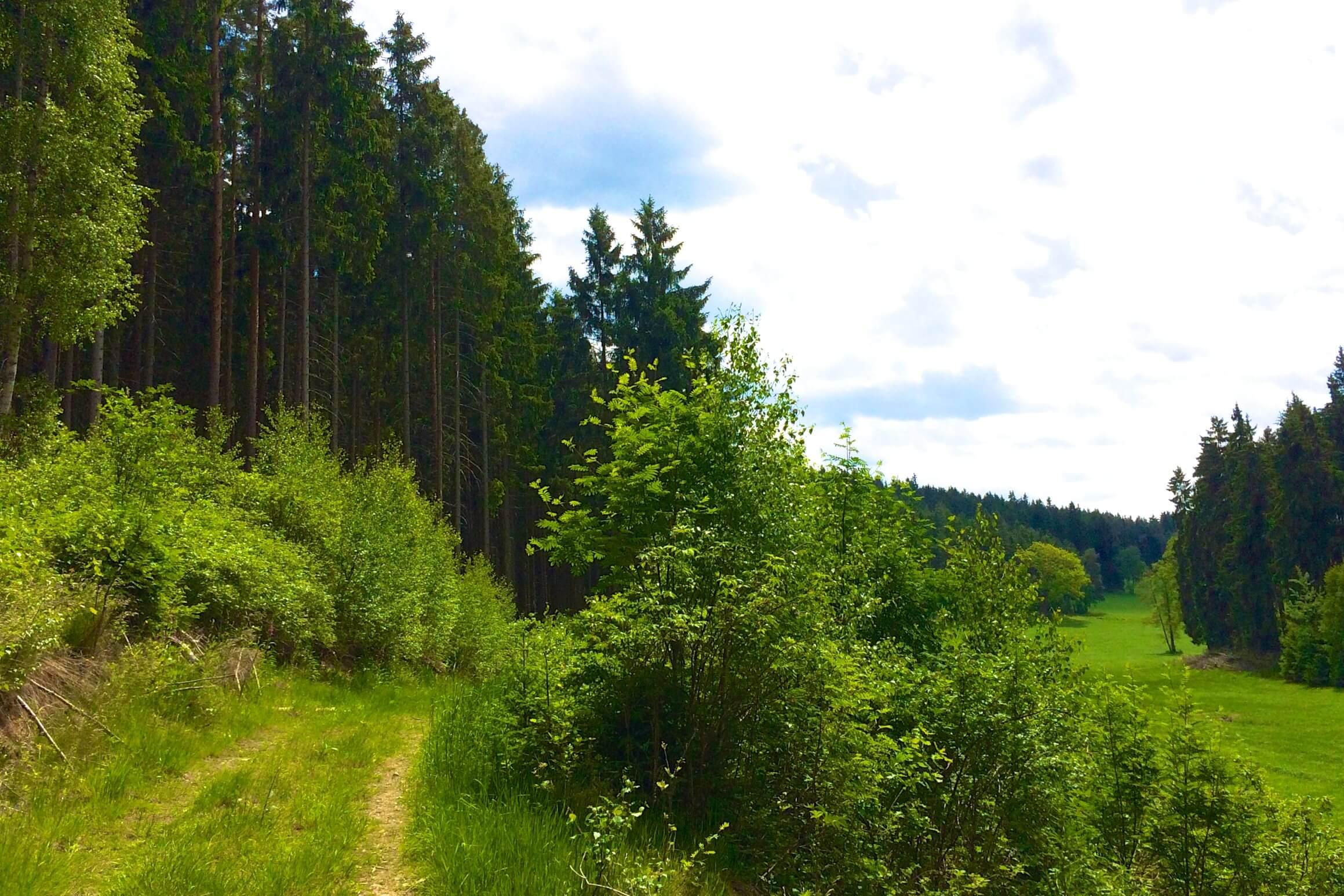 Nordic Walking: fast 8 Kilometer