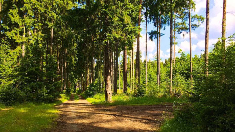 Trail Running im Schneckengrüner Wald