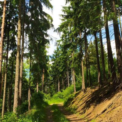 Trail Running im Schneckengrüner Wald mit Höhenmetern