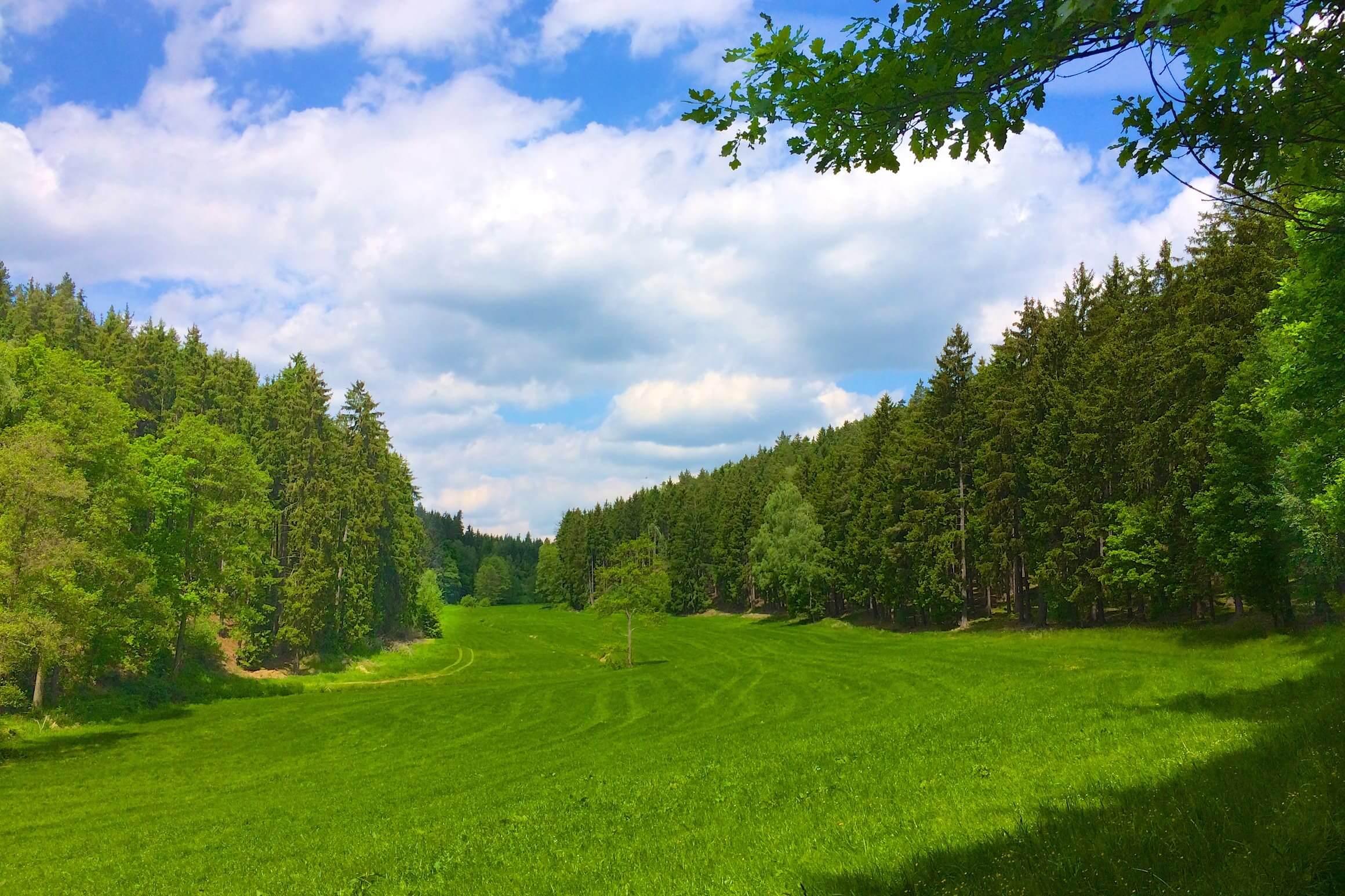 Nordic Walking Wiese & Natur