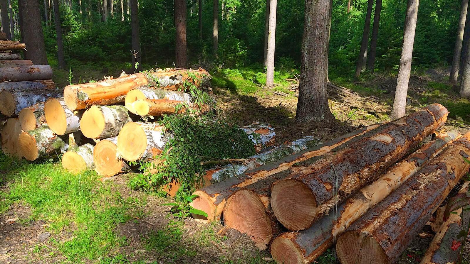 Outdoor & Trekking - wir lieben den Wald
