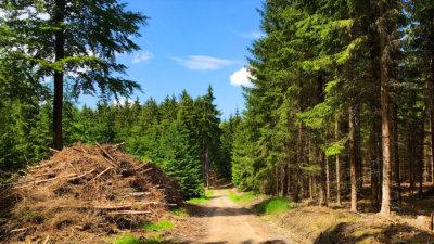Wandern im Schneckengrüner Wald im Vogtland und es war verflixt heiß