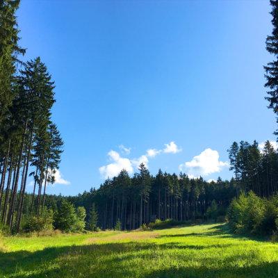 Wandern im Schneckengrüner Wald im Vogtland und es wurde langsam verflixt heiß