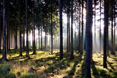 Wandern im Schneckengrüner Wald im Vogtland