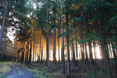 Wandern im Schneckengrüner Wald im Vogtland bei Sonnenaufgang