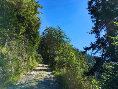 Bergwanderung auf Rauschberg in Ruhpolding Bayern - stetig bergauf