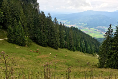 Wanderung auf Unternberg in Ruhpolding Bayern - fast am Ziel