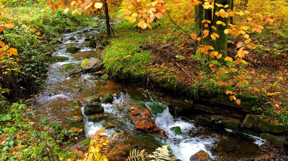 Wildes Erzgebirge – Runde über den Auersberg